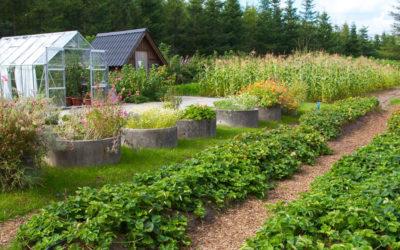 Garden Farming Introduction