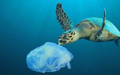 Plastic Pollution in Depth